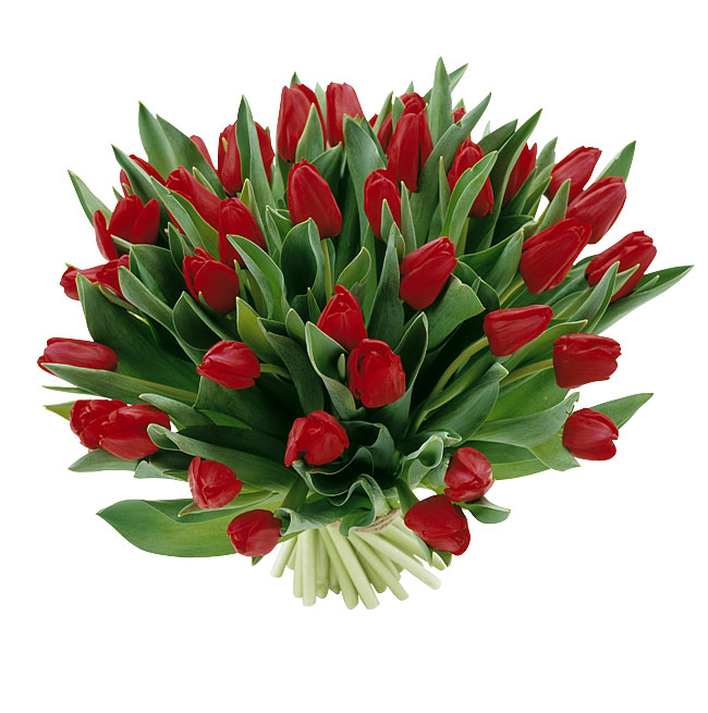 tulpen-rood
